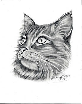 Barb Baker - Maine Coon