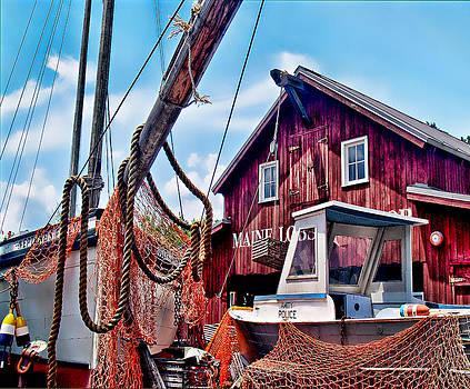Maine Lobster by Carol  Teal