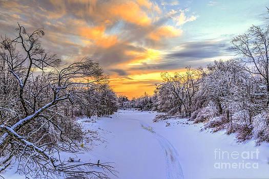 Brenda Giasson - Maine Winter Woods