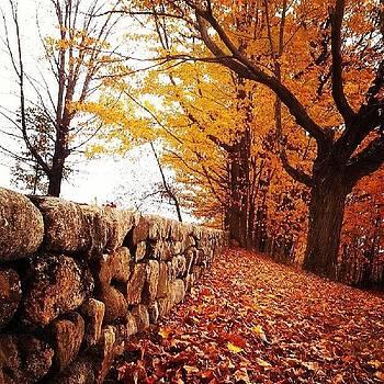 #mainstafoliage #fall #autumn by Laura Vaillancourt