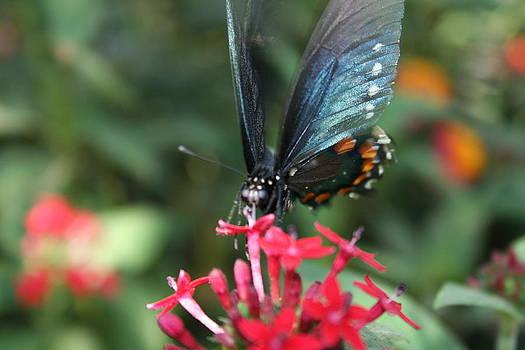 Majestic Butterfly by Rebecca Christine Cardenas
