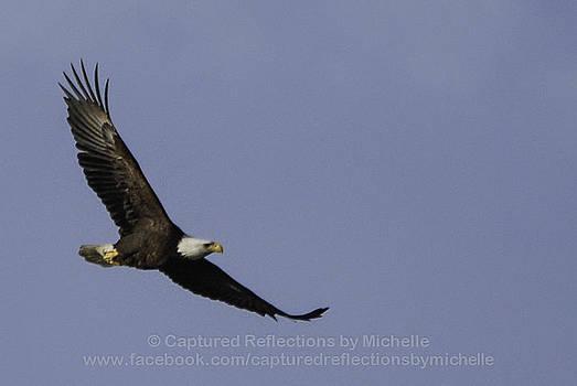 Majestic Eagle by Michelle Hulen