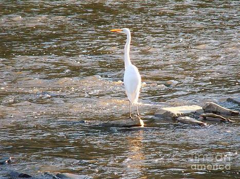 Majestic Egret 1 by Leslie Jennings