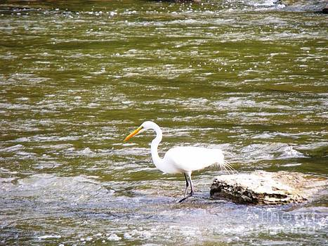 Majestic Egret 2 by Leslie Jennings