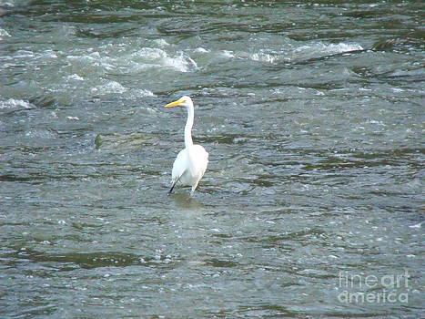 Majestic Egret 7 by Leslie Jennings