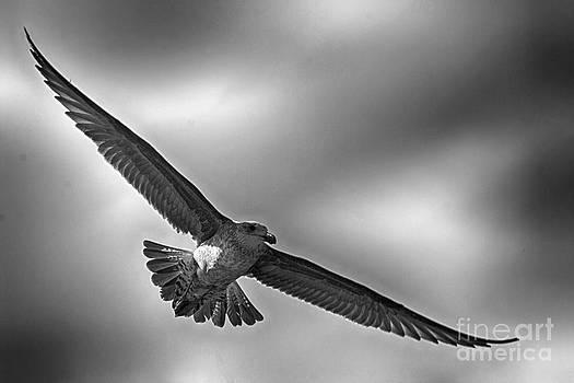 Andrew  Hewett - Majestic Flight