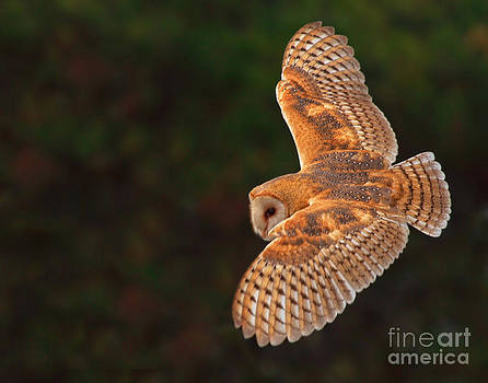 Majestic Flight by Beth Sargent