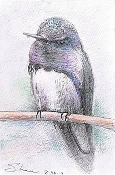 Majestic Hummingbird by Shan Ungar