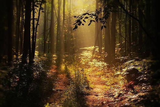 Scott Hovind - Majestic Trail