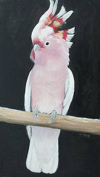 Jan Matson - Major Mitchell Cockatoo