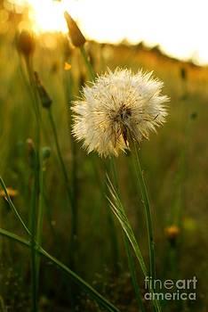 Make a Wish by Adam Dowling