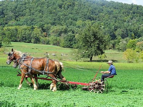 Making Hay by Jeanette Oberholtzer