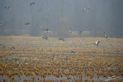Malard ducks 4 by Michelle Cawthon