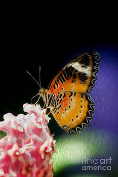 Malay Lacewing Butterfly I by Kenneth Montgomery