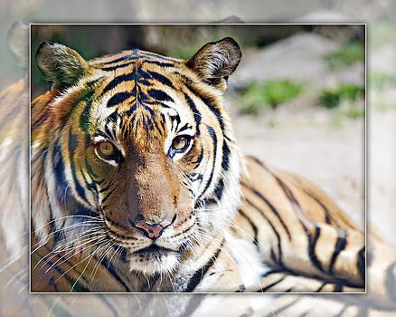 Malayan Tiger_B2 by Walter Herrit