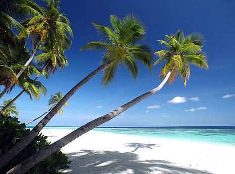Maldives 05 by Giorgio Darrigo