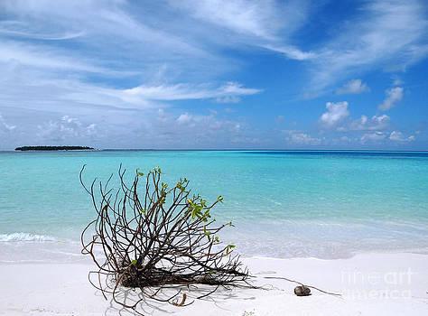 Maldives 12 by Giorgio Darrigo