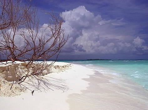 Maldives beach 03 by Giorgio Darrigo