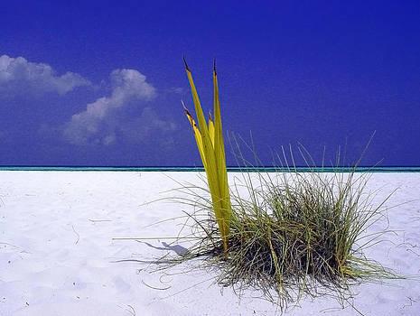 Maldives snail by Giorgio Darrigo