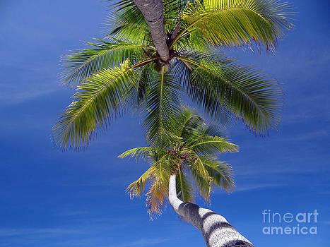 Maldivian 10 by Giorgio Darrigo