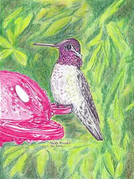 Male Anna's Hummingbird by Heidi Kunkel
