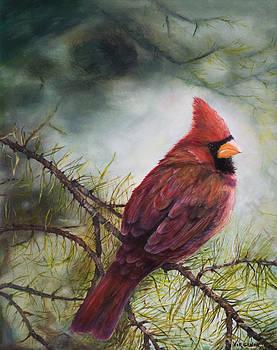 Male Cardinal by Virginia Butler