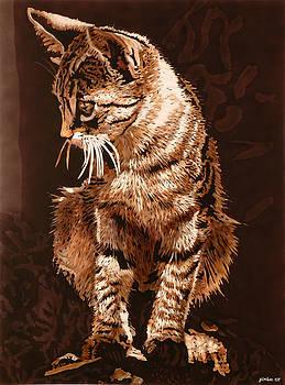 Male cat by Konstantinos-Pimba Botas