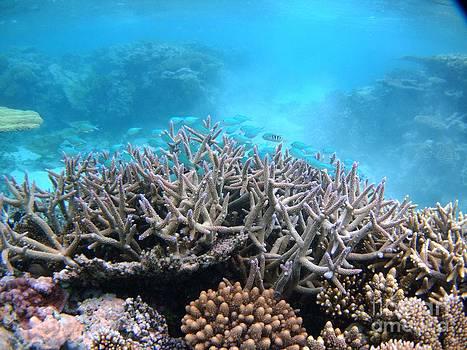 Malinoa Island reef by Crystal Beckmann