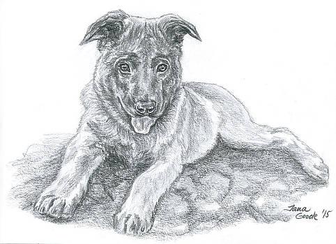 Malinois Pup by Jana Goode