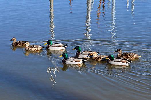 Bishopston Fine Art - Mallard Duck Family