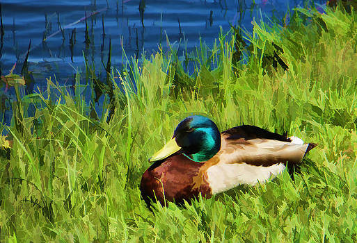 Ray Van Gundy - Mallard Duck in Grass