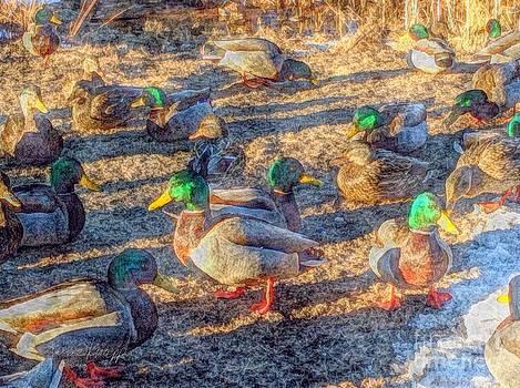 Mallard Ducks Feeding 20150121 by Julie Knapp
