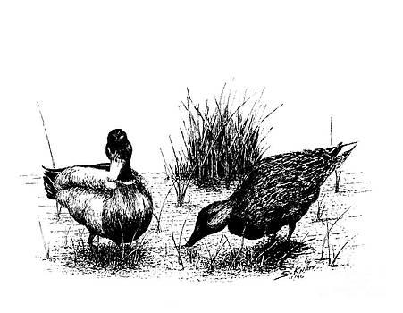 Mallards in the Marsh by Steve Knapp