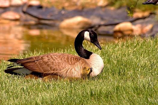 mama Goose by Rebecca Adams