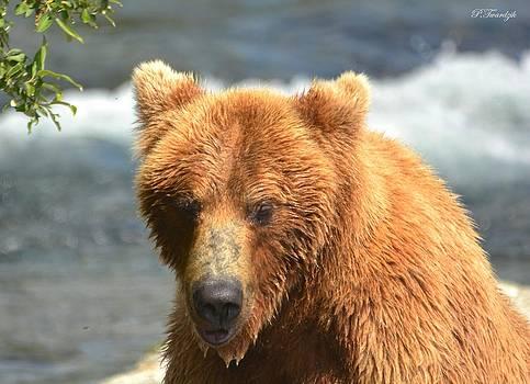 Patricia Twardzik - Mama Grizzly Bear