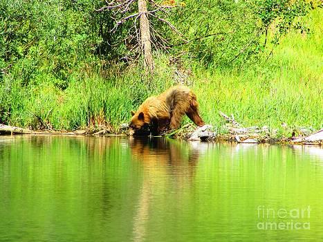 Mammoth Mountain Bear by Catherine DeHart