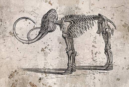 Mammoth Skeleton by John Cardamone
