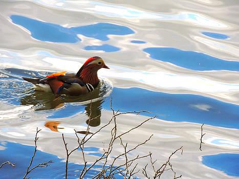 Mandarin Duck by Marilyn Holkham