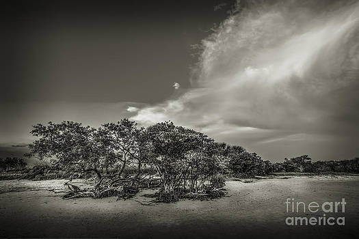 Mangrove at Low Tide by Marvin Spates