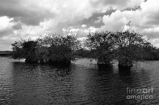 Mangrove Islands by Andres LaBrada
