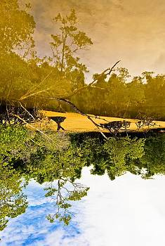 Mangrove Reflection by Clement Mansin