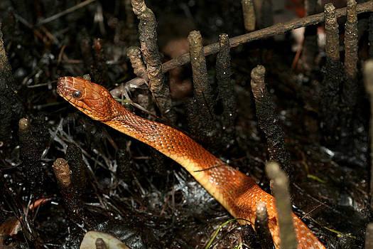 Mangrove Salt Marsh Snake by April Wietrecki Green
