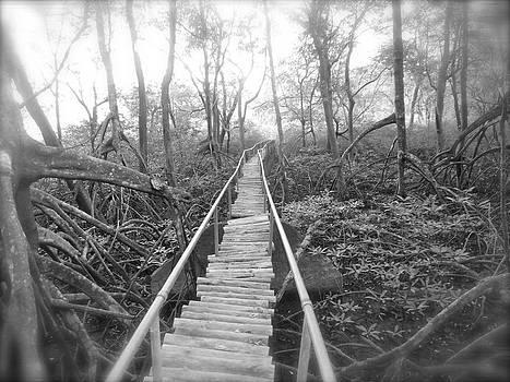 Mangrove by Tina Hannaford