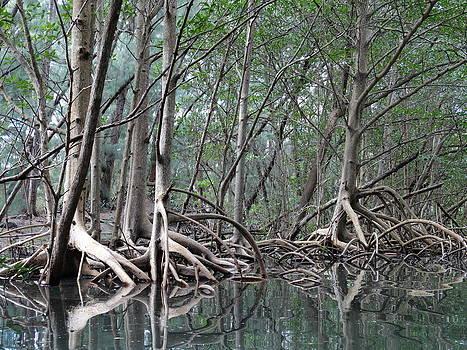 Frederic BONNEAU Photography - Mangroves Reflection