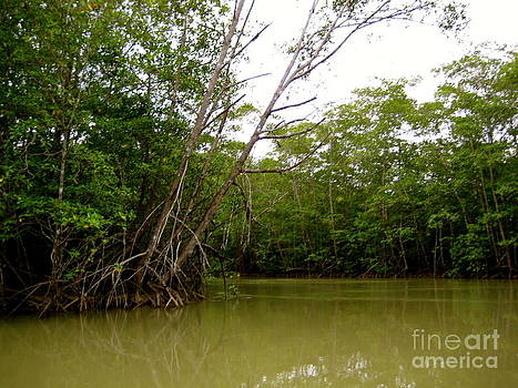 Mangroves by Shannon Enete