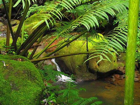 Manoa River Falls by Elaine Haakenson