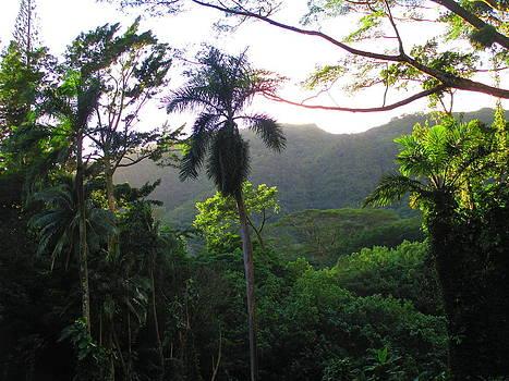 Manoa Valley 1 by Elaine Haakenson