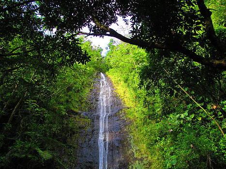 Manoa Valley Falls by Elaine Haakenson