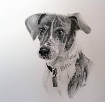 Man's Best Friend by Lori Ippolito