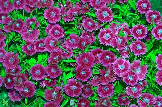 Many Blooms by Michael Sokalski